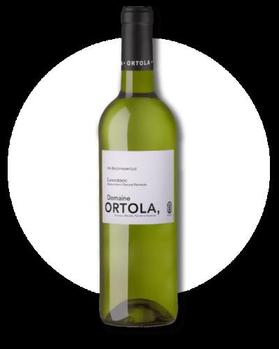 ortola-blanc-2